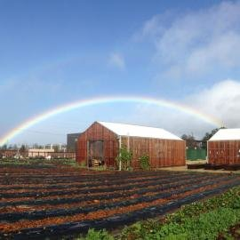 Rainbow over barn at Stanford's O'Donohue Family Educational Farm